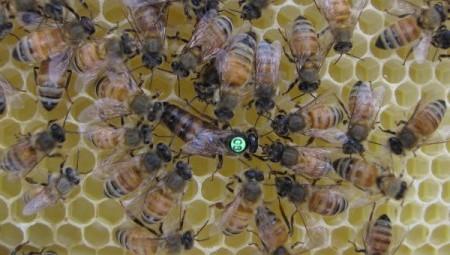 Как выбрать и сохранить, то что дает пчела
