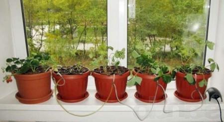 Как сделать маленький каменный сад на подоконнике