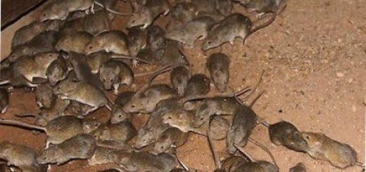Как избавиться от мышей?