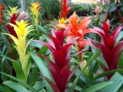 Уход-за-цветущими-комнатными-растениями