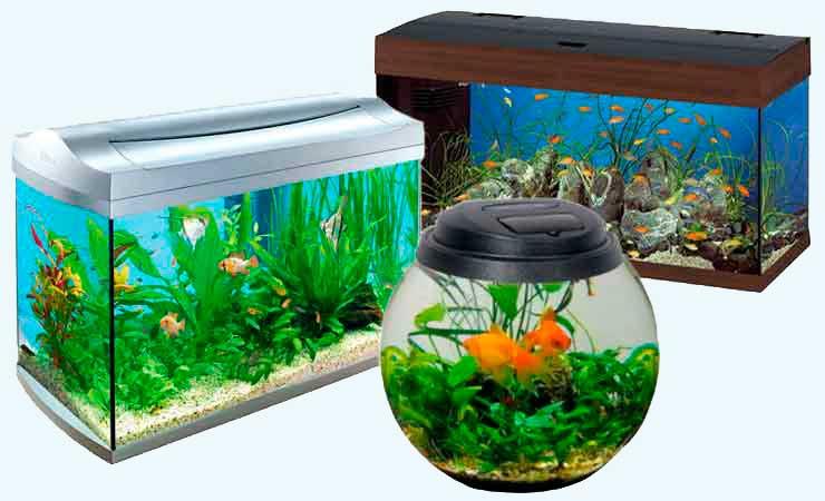 vybiraem-akvarium