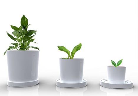 Как выбрать горшок для пересаживания растения?