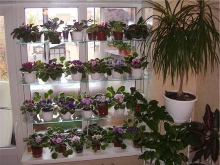 Чем и как удобрять комнатные растения