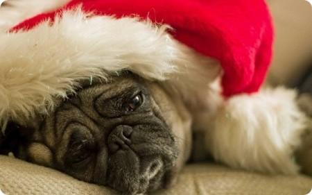 Как подготовить животных к новогодним праздникам?