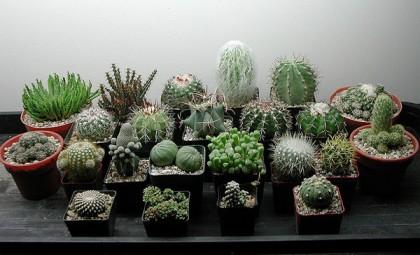 cacti_indoors