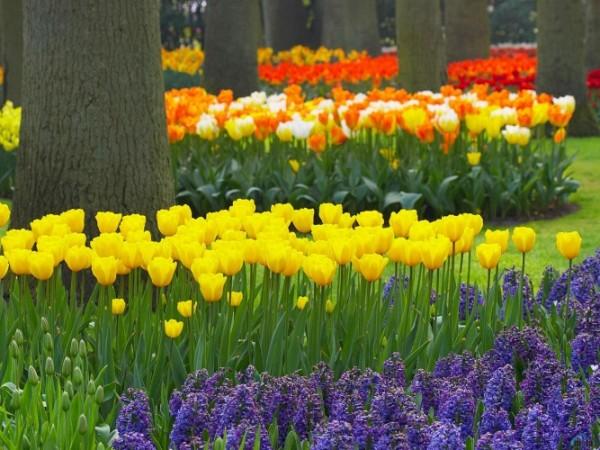 flowers_469-crop