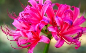 Как продлить цветение у растений