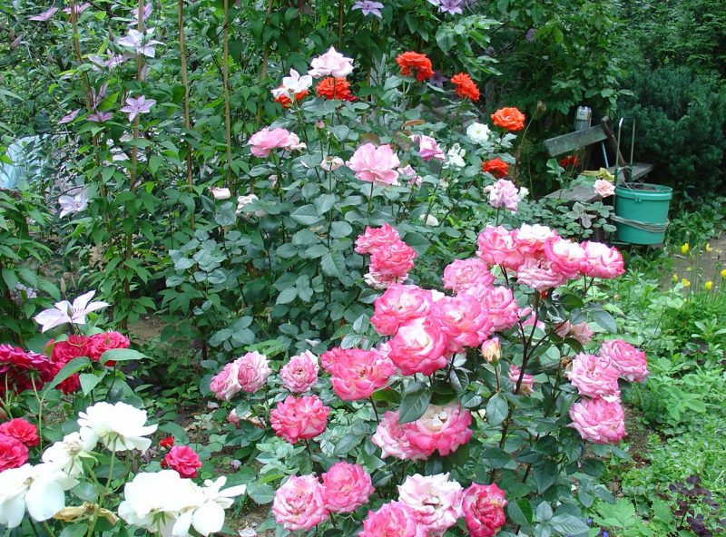 Формирование роз