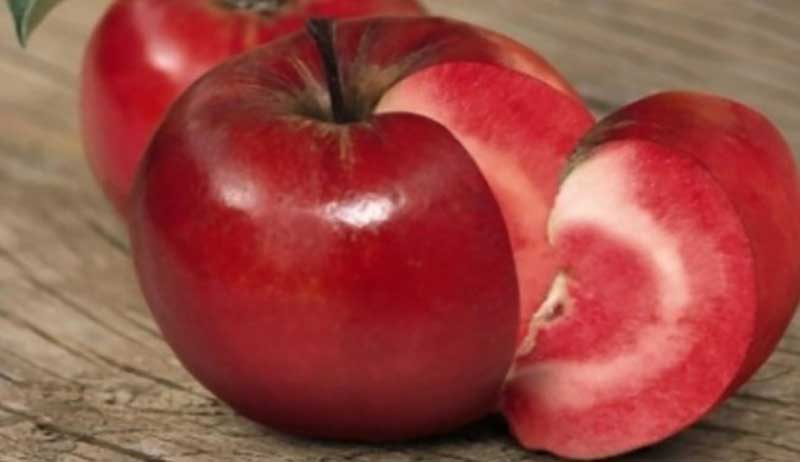 Выращивание красномякотных яблонь