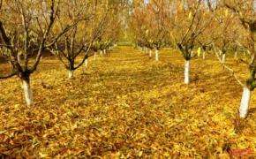 Осенние работы в плодовом саду