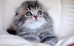 Социальная адаптация кошки