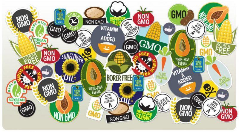 Генетически модифицированные растения - огромный провал