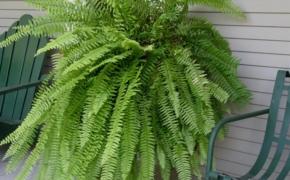 Зеленые лекари. 5 полезных комнатных растений