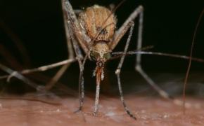 10 способов изгнать комаров из квартиры