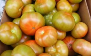 Свежие помидоры до весны