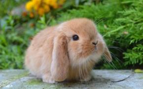 Как правильно кормить мини-кролика