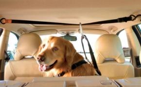 4 правила перевозки питомца в машине