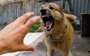 Почему собака кусается?