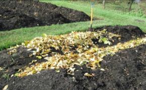 Грядки готовлю с осени